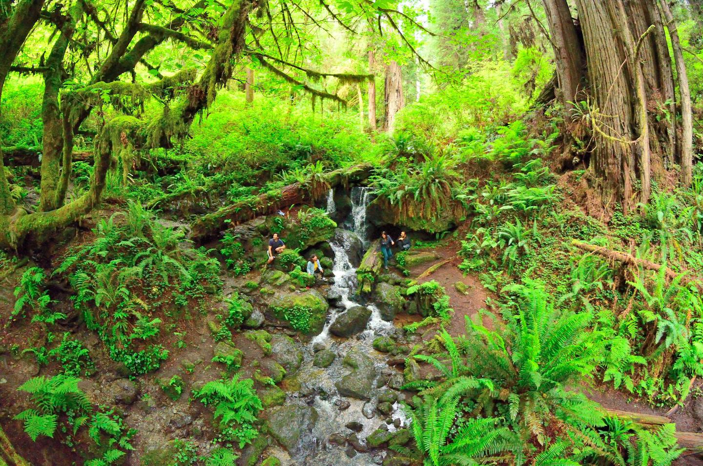Trillium FallsThe Trillium Falls Trail is a popular, easy and family friendly walk.