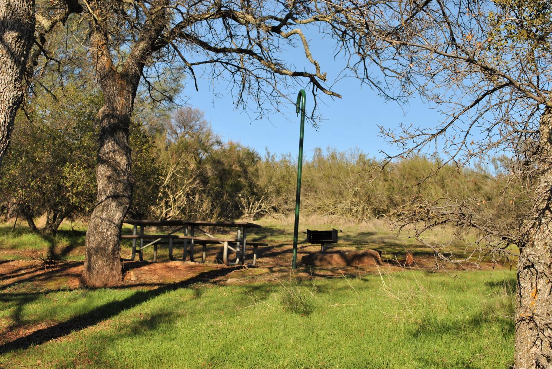 Acorn Campground Site 81 Picnic AreaCampsite