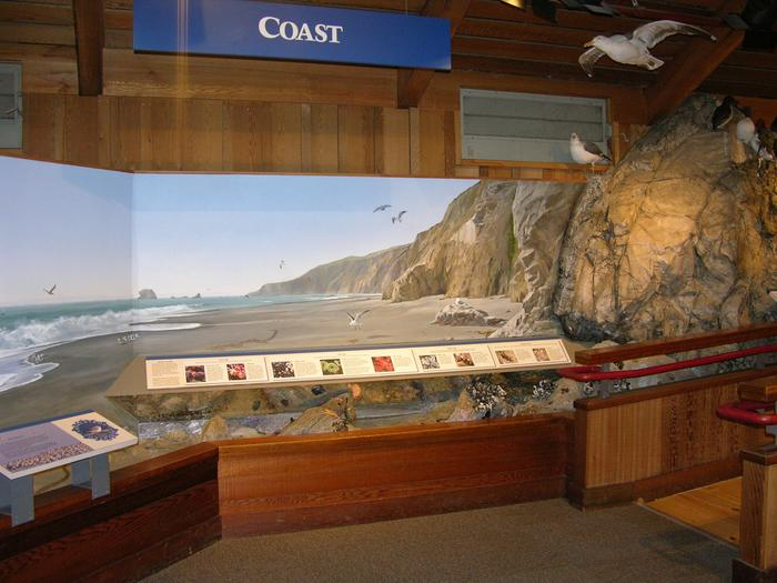 Bear Valley Visitor Center: Coastal ExhibitLearn about the marine organisms one might find along the shoreline.