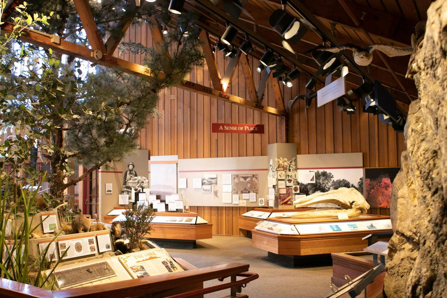 Bear Valley Visitor Center ExhibitsLearn about the thousands of years of human history at Point Reyes.
