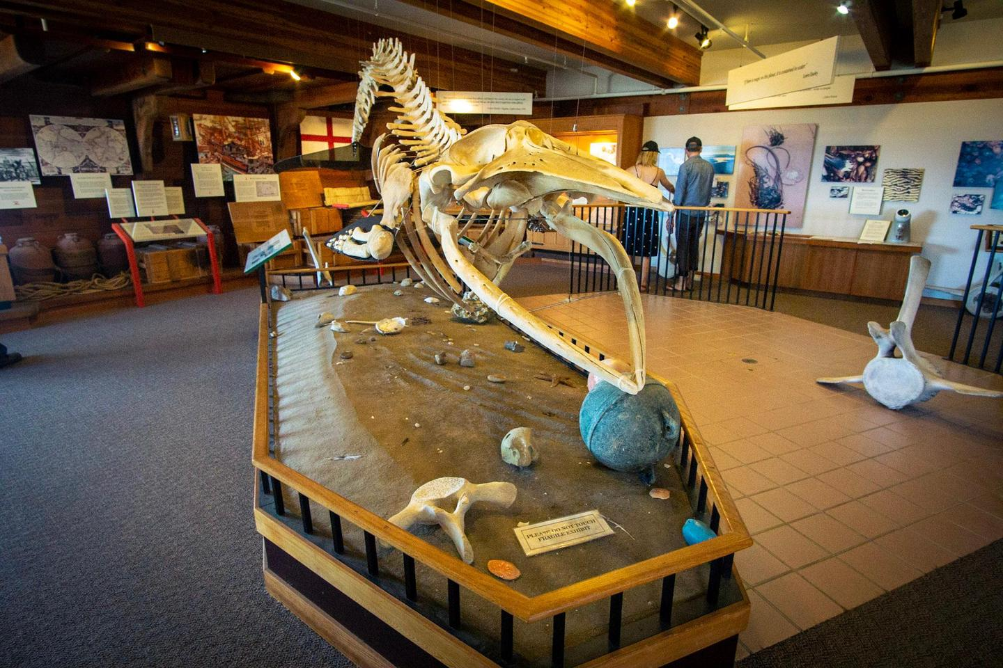 Kenneth C. Patrick Visitor Center: Minke Whale SkeletonThe skeleton of a two-year old minke whale that was found dead on Kehoe Beach is now displayed in the Kenneth C. Patrick Visitor Center.