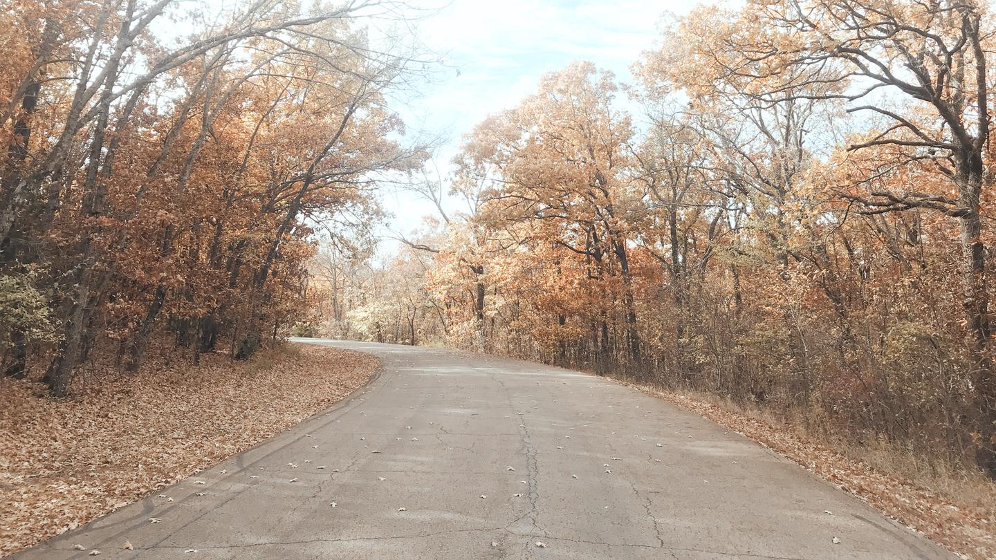 Entry road to Redbud Bay Campground in the fall