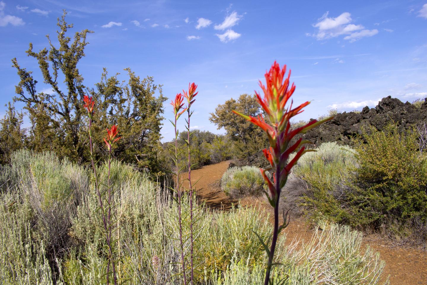 Paintbrush along park trail