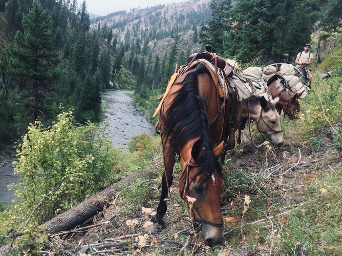 Horses carrying loaded packs on the NFJD River TrailEnjoy the stock amenities available at the North Fork John Day campground!