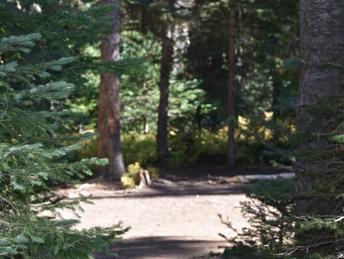 Campground with conifer trees around.Jubilee Lake: Site #1