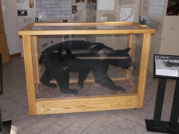 "Scar the Black BearLearn about how to be ""bear safe"" when camping in the Apostle Islands."