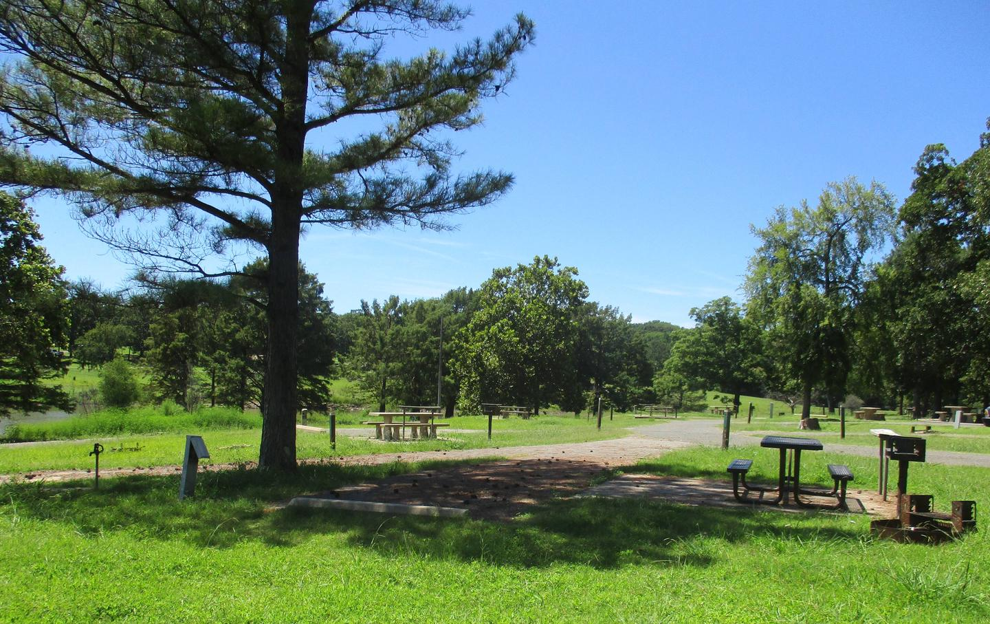 Site 15 - TFSSite 15 is a back in site with an asphalt drive.  Large pine tree offers partial shade throughout the day.