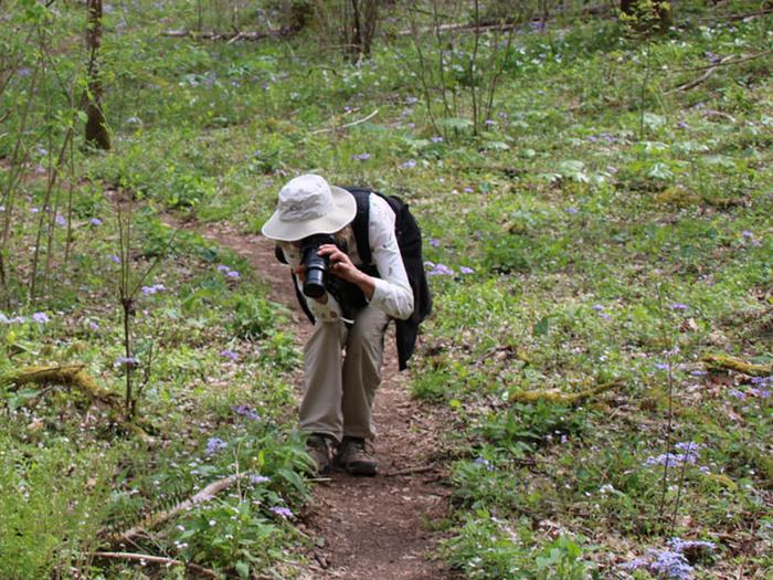 Preview photo of Whiteoak Sink Group Hiking Permits