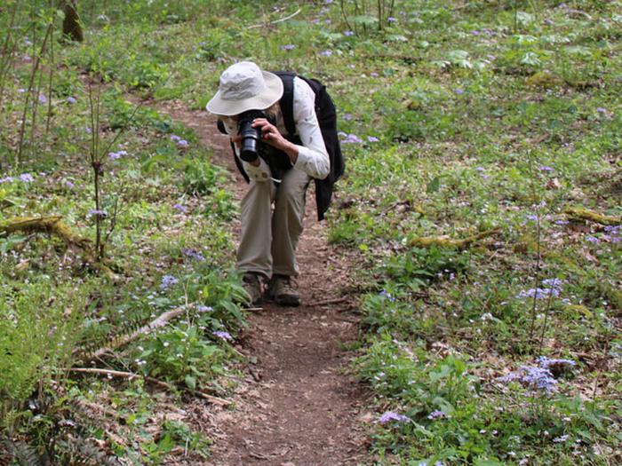 Whiteoak Sinks HikerPhotographer photographing wildflowers