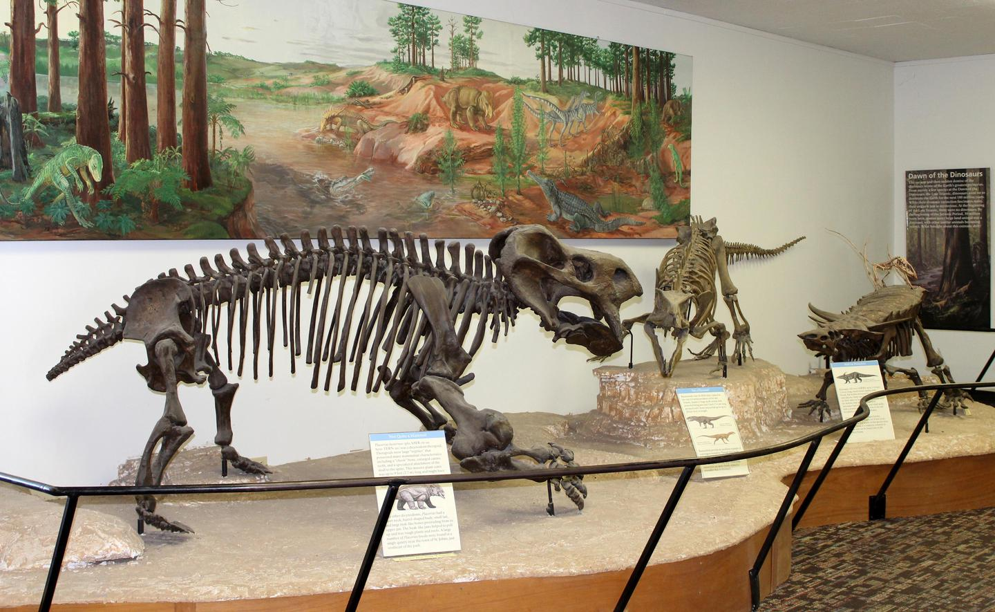 Fossil animal exhibit at Rainbow Forest Museum