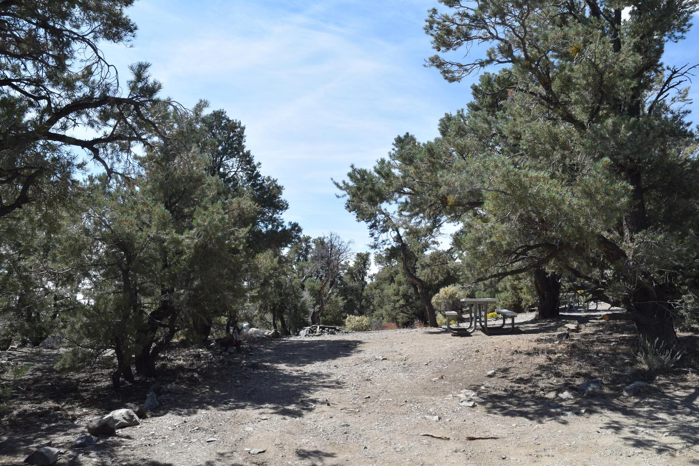 Mahogany Flat Campground Sample Site #1Sites are in a pinyon/juniper forest, with picnic tables and fire rings provided.
