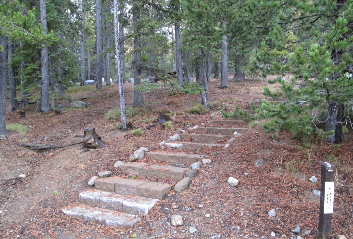 campsite stairsOlive Lake Campground site #3
