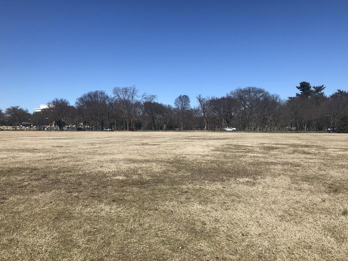 The image shows an open grassy area with trees in the background.Field M1