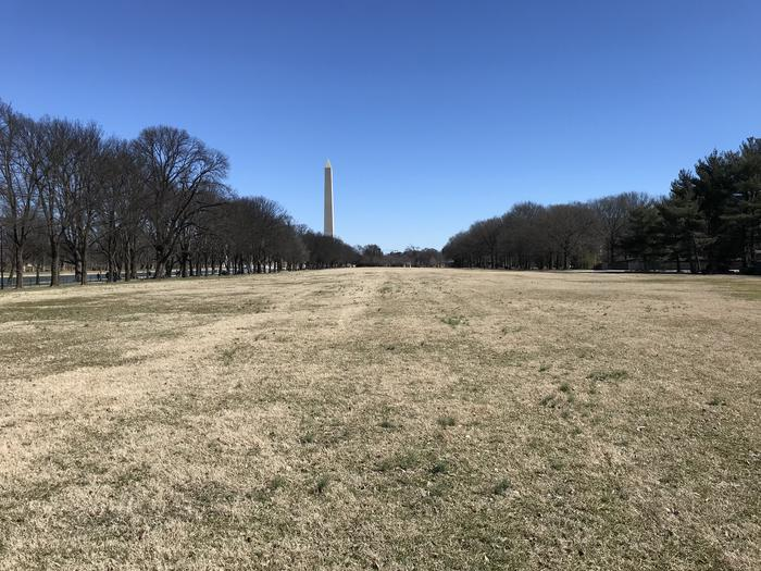 The photo shows an open grassy field flanked by trees. The Washington Monument can be seen in the background.Field M6