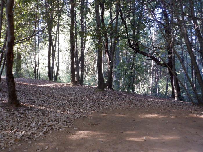 Campsite 34Tent pad