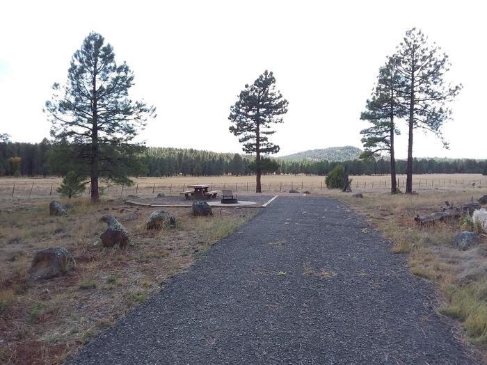 Tree and campsiteSite 001