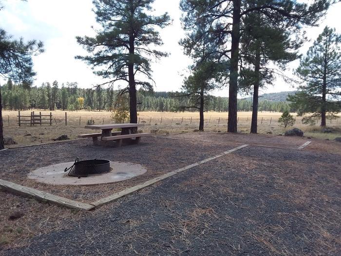 Campsite with treesCampsite 3
