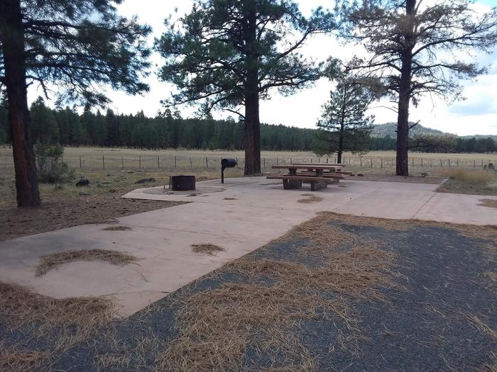 paved site with treesSite 006