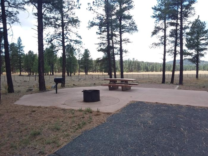 paved campsite with treesSite 008