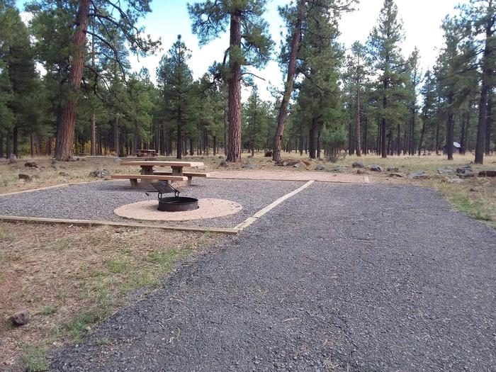 Gravel campsite with mature trees and rockssite 020