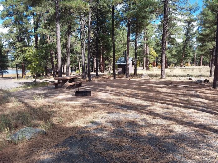 campsite in the trees close to the vault toiletsite 023