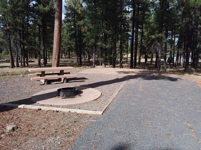 campsite in the treessite 024