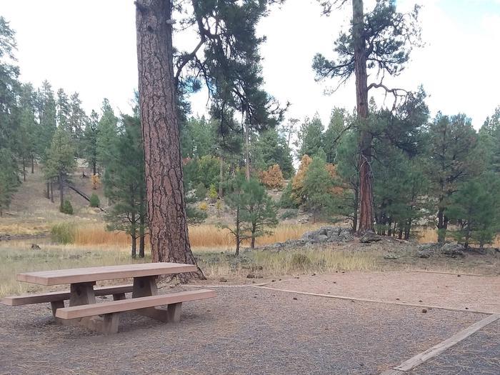 campsite with mature treessite 036