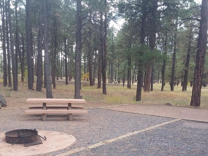 gravel campsite with lots of treessite 045
