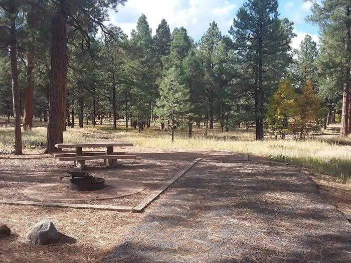 campsite with pretty view of mature treessite 050