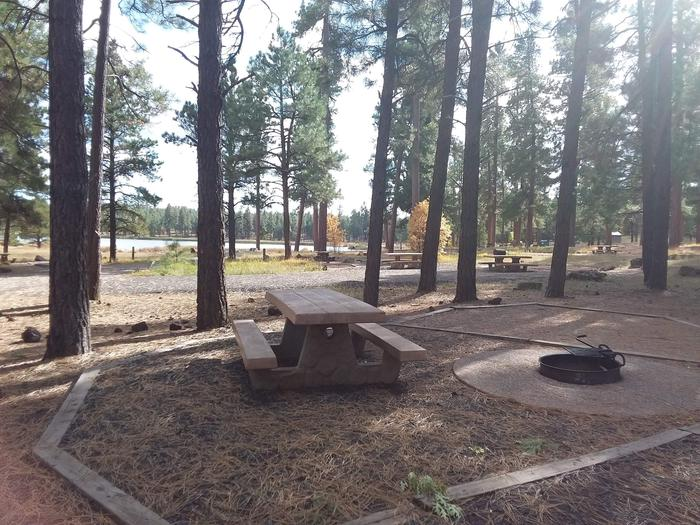 campsite with picnic table and fire ring surrounded by treessite 069