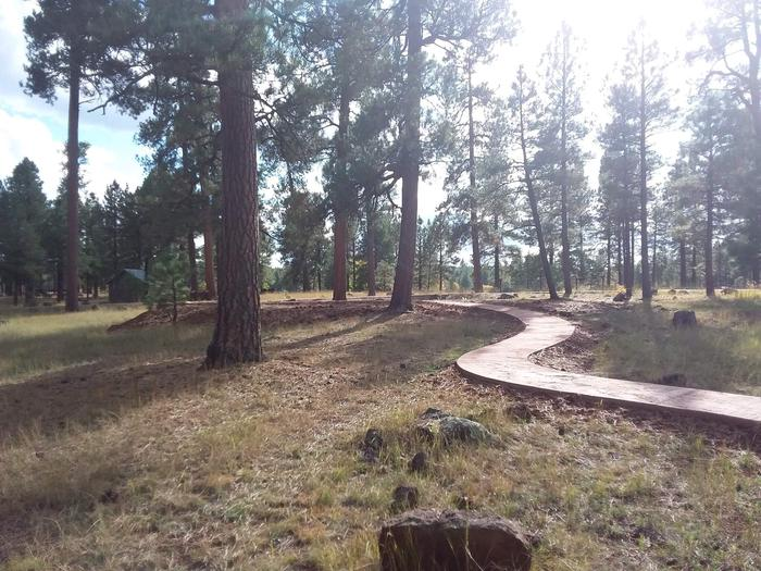 Group campsite with concrete path and mature treesgroup campsite