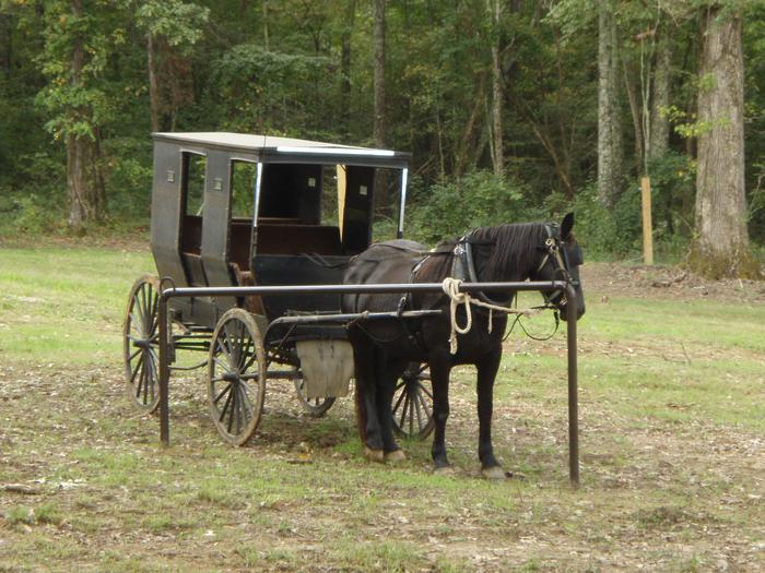 Ride the trailsHorse and buggy