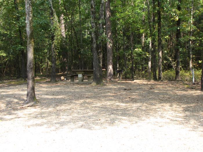 Campsite # 4Self Creek Campsite # 4