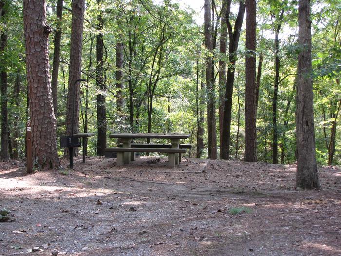 Campsite # 9Self Creek campsite # 9