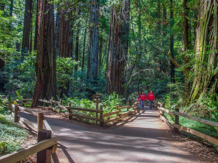 Cathedral GroveVisitors along the trail in Muir Woods