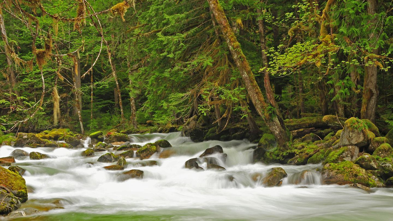 Water rushing with lush foliage surroundingNewhalem Creek