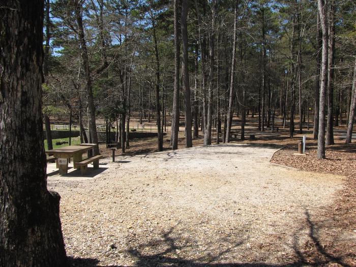 Campsite # 56Kirby Landing campsite # 56