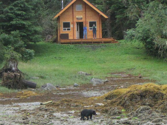 Anan Bay Cabin with black bear on the beach.Bear in front of the cabin