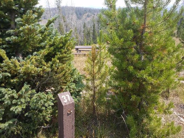 Hog Park Campground Site 37 Photo 3
