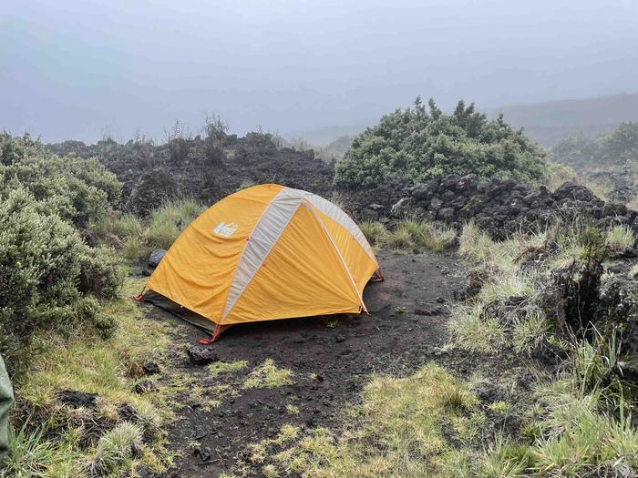 Orange tent in dirt patch surrounded by shrubs and low grassesHōlua tent site 2