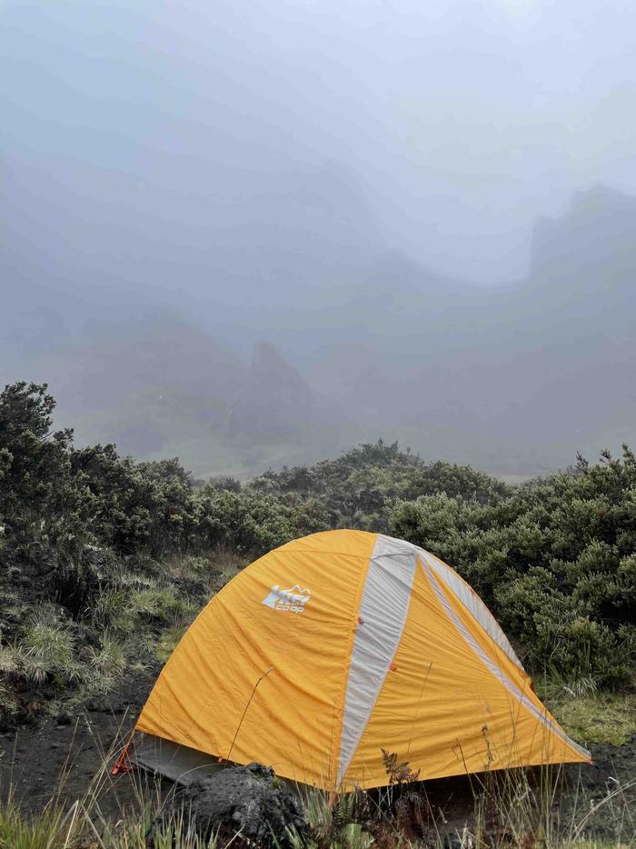 orange tent with shrubs and fogHōlua tent site 2