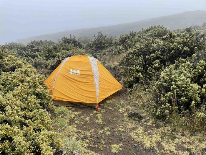 orange tent closely surrounded by shrubsHōlua tent site 4 with tent