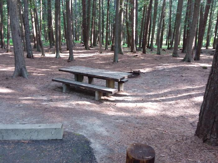 Yaak River Site 15-Table