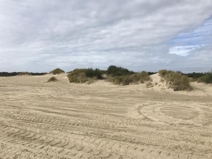 South Jetty Sand Camp Site #4