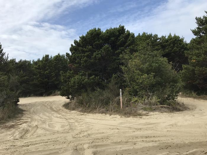South Jetty Sand Camp Site #8