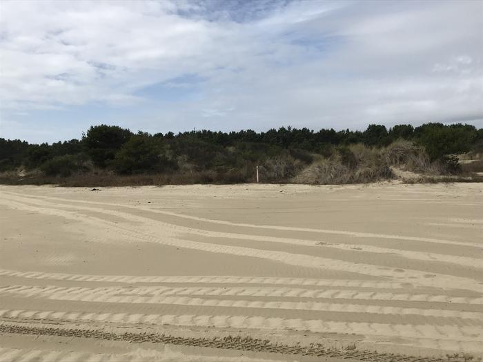 South Jetty Sand Camp Site #10