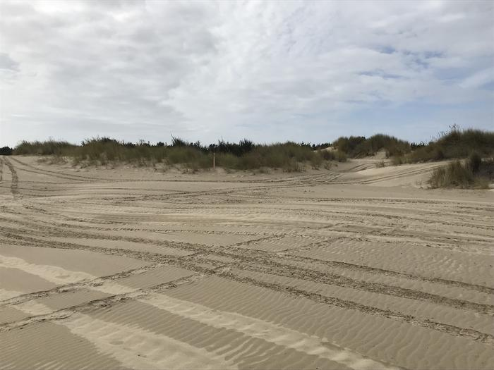South Jetty Sand Camp Site #12
