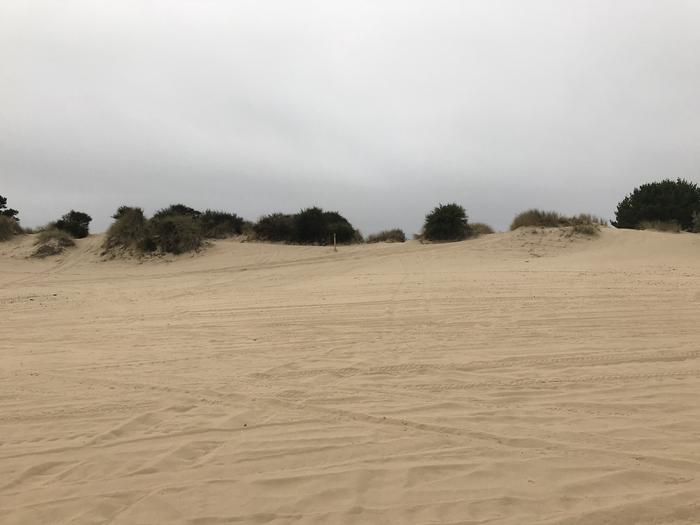 Umpqua Sand Camp Site #31