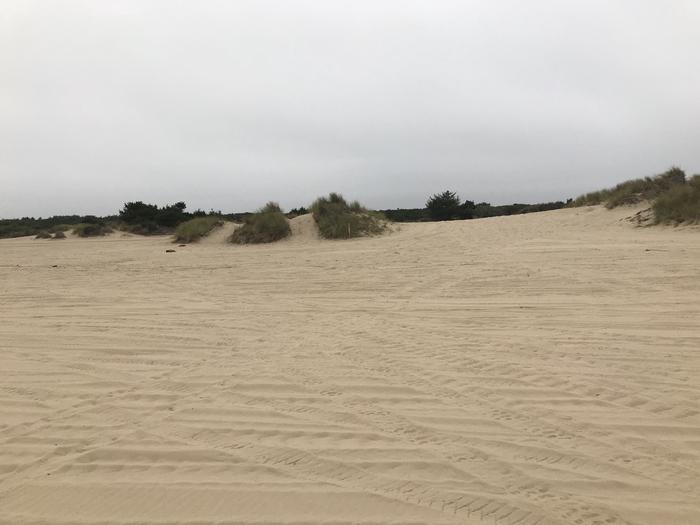 Umpqua Sand Camp Site #32
