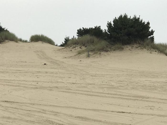 Umpqua Sand Camp Site #33